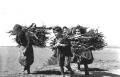 Κουβαλώντας ξύλα, 1953